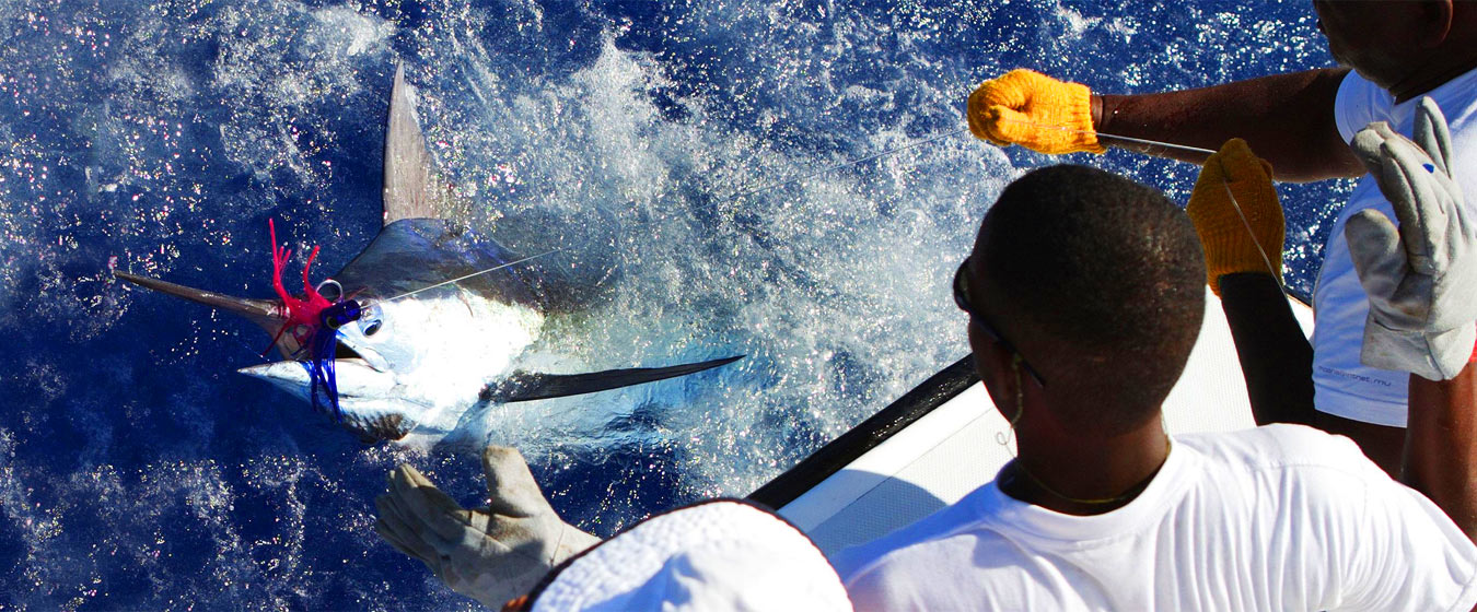 Mauritius-Billfish-realease-Tournament