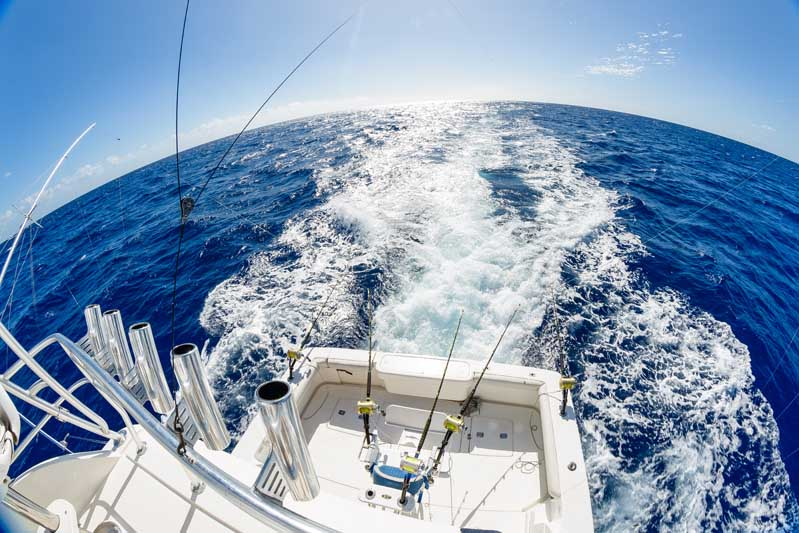 Mru-Billfish-Release-Day2-71