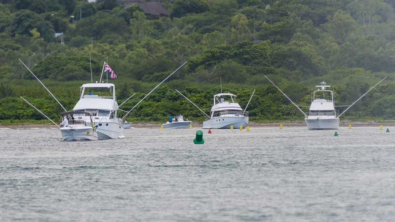 Mru-Billfish-Release-Day3-16