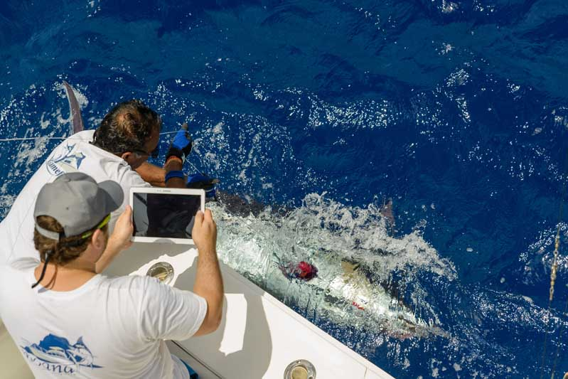 Mru-Billfish-Release-Day4-30